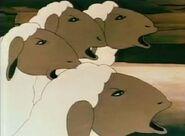Animalfarm-sheep