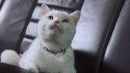 MAD Cat Live Action inspectorgadget17