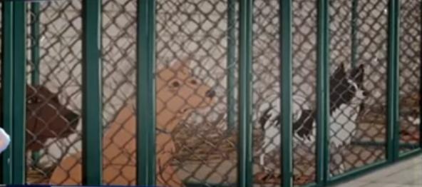 Imprisoned Dogs (Plague Dogs)