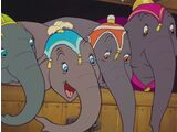 The Elephants (Dumbo)