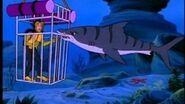 Shark Free Willy
