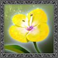 Flower (Dialogue).png
