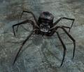 Black Spider (Enemy).png