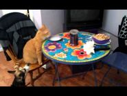 Breakfast with Mitty, cute cat
