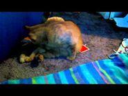 Cat giving birth , kitten -1