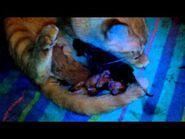 Cat giving birth ..