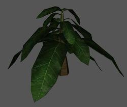Plant redirect.jpg