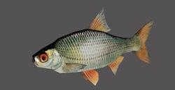 Fish redirect.jpg