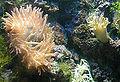 Anemone.bristol.750pix