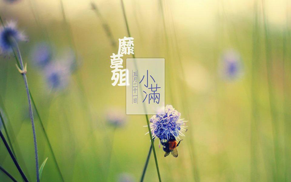 小满 (Xiǎomǎn)