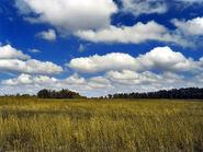 Cumulus de beau temps2