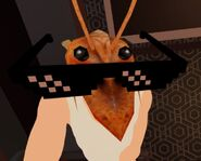 Shrimp look into my eyes