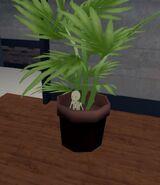 Rofl Jan 25th 18 Meech in a planter