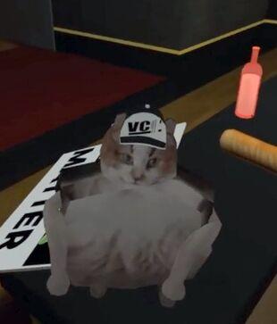 Scuffed Cat