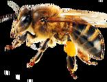 Bee (Real Life)