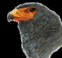 Blood Hawk