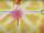 DemonGodMitchAubin/Fate Series: Karna melts the ground