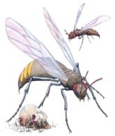 Giant Wasp (Dungeons and Dragons)