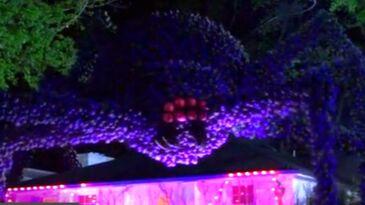 Giant Balloon Spider (Goosebumps)