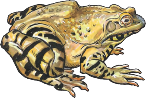 Giant Frog (Dungeons and Dragons)