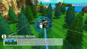 Evergreen Grove