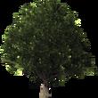 Baum für Startseite.png
