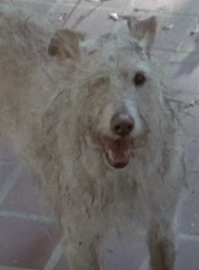 One-Eyed Dog (TV Series)