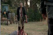 Merle Zombie