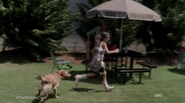 Rfd and dog 2