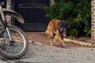 10x21 Dog and Bike
