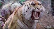 Shiva-Ready-Fight