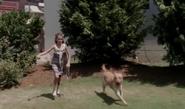 Rfd and dog 1