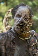 811 swamp Walker 2