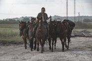 5x16 Dwight with horses