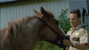Horse and rick4