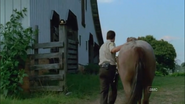 Horse and rick5