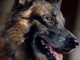 Dog (TV Series)