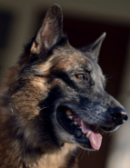Собака Дэрила Season ten(10)