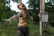 TWD 801 JLD 0509 0862-RT-GN-1