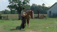 Horse and rick3