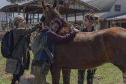 11x03 Embracing the Horse