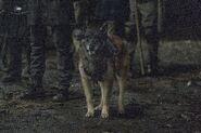11x02 Dog