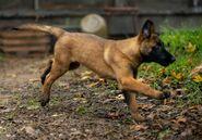 10x18 Puppy Dog
