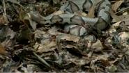 Snake in chupacabra
