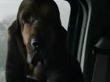 Rufus (Fear)