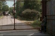 Sasha at gate