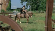 Horse and rick6