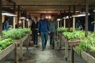 FTWD 6x11 Greenhouse