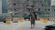 Horse and rick10