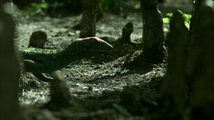 Petrolacosaurus.jpg